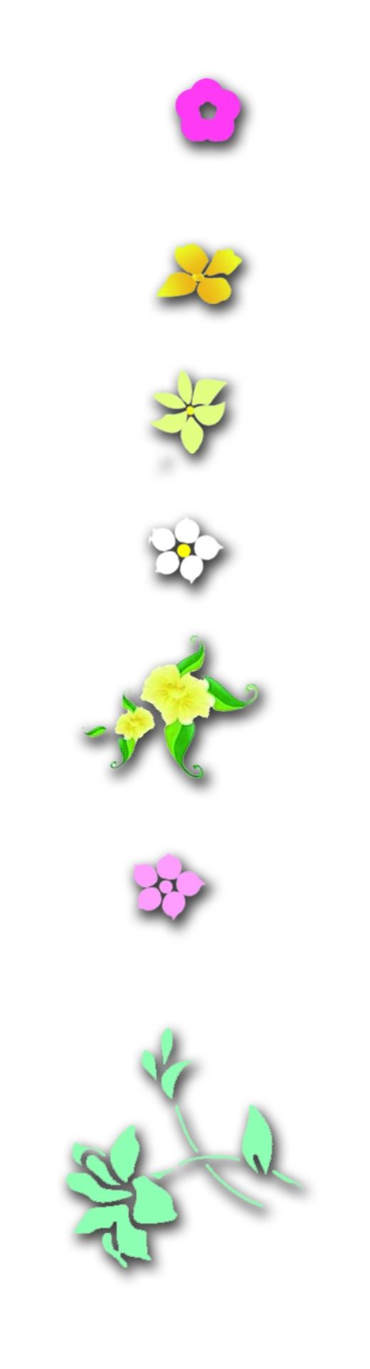 油菜花花蕾变化简笔画