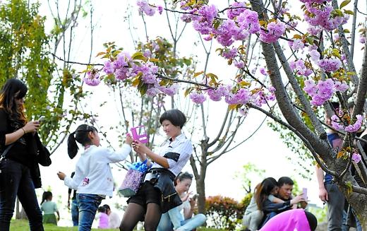 蔡家赏/29日,市民在蔡家赏樱花,享受美好春光。重庆晨报记者杨新宇...
